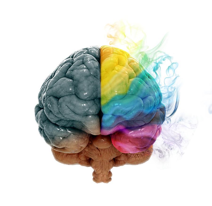 Curiosidades-Cerebro-Tips-Educacion